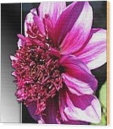 Dahlia Named Blue Bayou Wood Print