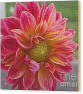 Dahlia Named Brian's Sun Wood Print