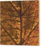 Dogwood Leaf Backlit Wood Print