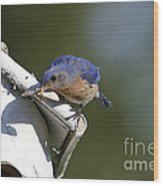 Eastern Bluebird Wood Print by Linda Freshwaters Arndt