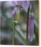 Fawn Lily Wood Print