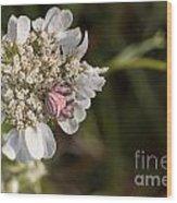 Flower Crab Spider Wood Print