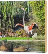Greater Flamingos Wood Print