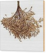Hanging Dried Flowers Bunch Wood Print