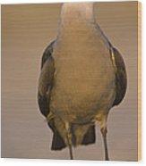 Heermanns Gull Wood Print