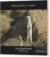 Long-tailed Weasel Wood Print