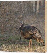 Male Eastern Wild Turkey Wood Print by Linda Freshwaters Arndt