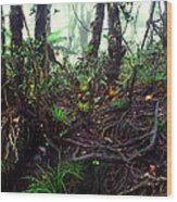 Misty Rainforest El Yunque Wood Print