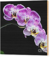 Moon's Orchid  Wood Print
