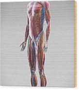 Muscle System Wood Print