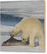 Polar Bear With Fresh Kill Wood Print