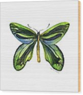 6 Queen Alexandra Butterfly Wood Print