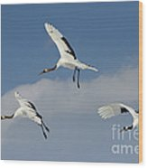 Red-crowned Cranes Wood Print
