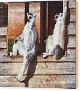 Ring Tailed Lemurs Wood Print