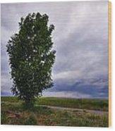 Sababurg Wood Print