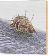 Scabies Mite Wood Print