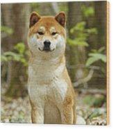 Shiba Inu Dog Wood Print