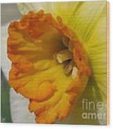 Small-cupped Daffodil Named Barrett Browning Wood Print