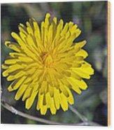 Spring Wild Flower Wood Print by George Atsametakis