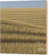 Tracks In Field Wood Print