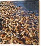 Ussurian Taiga Autumn Wood Print