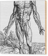 Vesalius: Muscles, 1543 Wood Print
