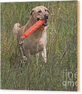Yellow Labrador Wood Print by Linda Freshwaters Arndt