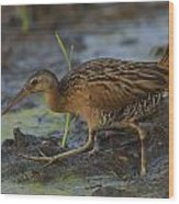 King Rail In A Wetland Wood Print