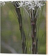 Beargrass  -  60603-32 Wood Print