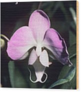 Orchid Flower Wood Print