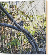 641 Cf Two Branches Wood Print