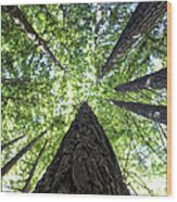 642 Pr A Stand  Of Trees Wood Print
