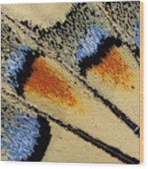 Close-up Detail Wing Pattern Wood Print