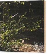 654 Cf Solitary Stream  Wood Print