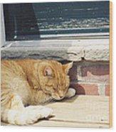 #665 03 Catnap  Wood Print