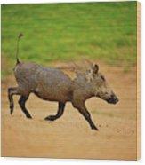 African Mammals Wood Print