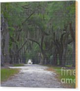 Allee Of Live Oak Tree's Wood Print