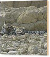 Arabian Leopard Panthera Pardus Wood Print