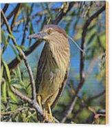 Black-crowned Night Heron (nycticorax Wood Print