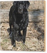 Black Labrador Retriever Wood Print by Linda Freshwaters Arndt
