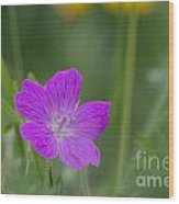 Bloody Geranium Wood Print