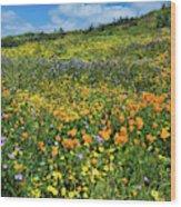 California Poppies Eschscholzia Wood Print