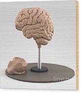 Clay Model Of Brain Wood Print