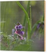 Common Lungwort Wood Print