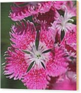Dianthus Cross Wood Print