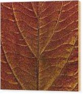 Dogwood Leaf Backlit Wood Print