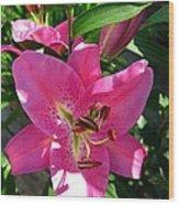 Dwarf Oriental Lily Named Farolito Wood Print