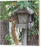 Eastern Fox Squirrel Wood Print