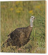 Eastern Wild Turkey Wood Print by Linda Freshwaters Arndt