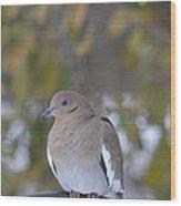 Female White Wing Dove Wood Print